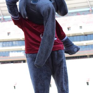 "Pictured is the Alabama mascot ""Big Al"" who is a big grey elephant wearing a red Alabama jersey"